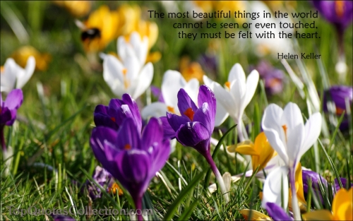 Beautiful Things are felt with the Heart