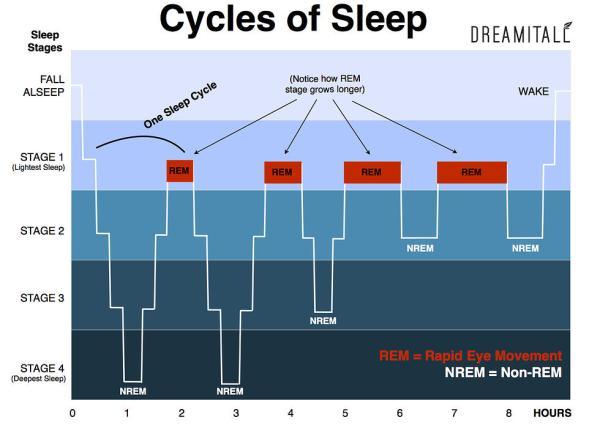 sleep cycle charts